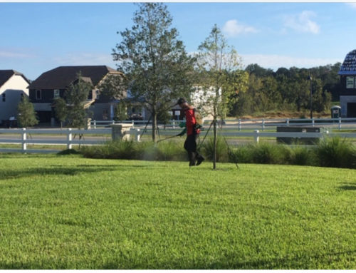 October Pest Control Central Florida