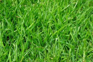 St. Augustine Grass Care - Luv-a-Lawn and Pest Control Osceola Pest Control Company