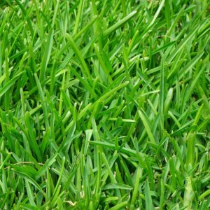 St. Augustine Grass Care Luv-a-Lawn and Pest Control Osceola Pest Control Company