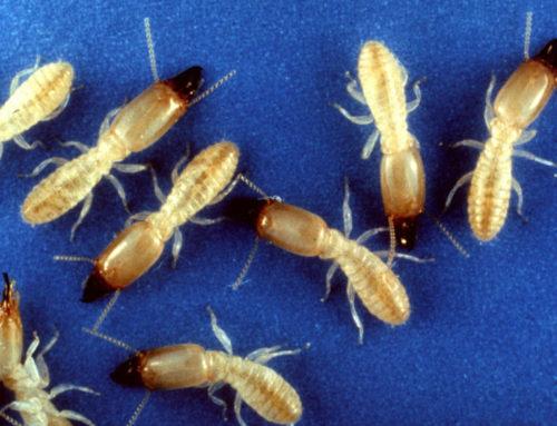 Central Florida Termite Control