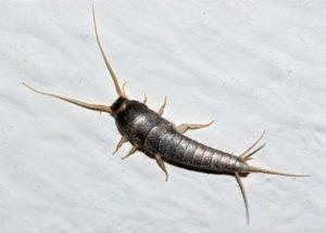 St. Cloud Florida Pest Control