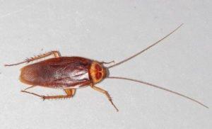 Central Florida Pest Control Tips 2018