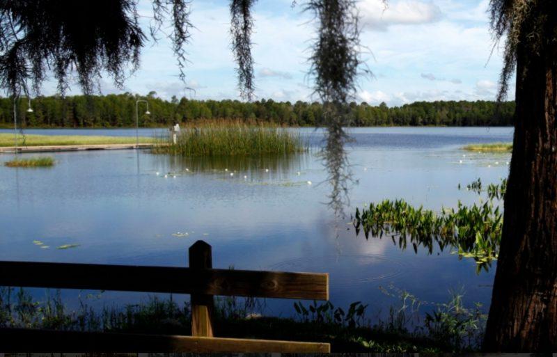 Windermere Florida Shrub Care