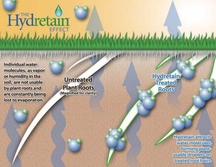 The Hydretain Effect Graphic showing how roots treated with Hydretain attract usable water molecules from the soil.