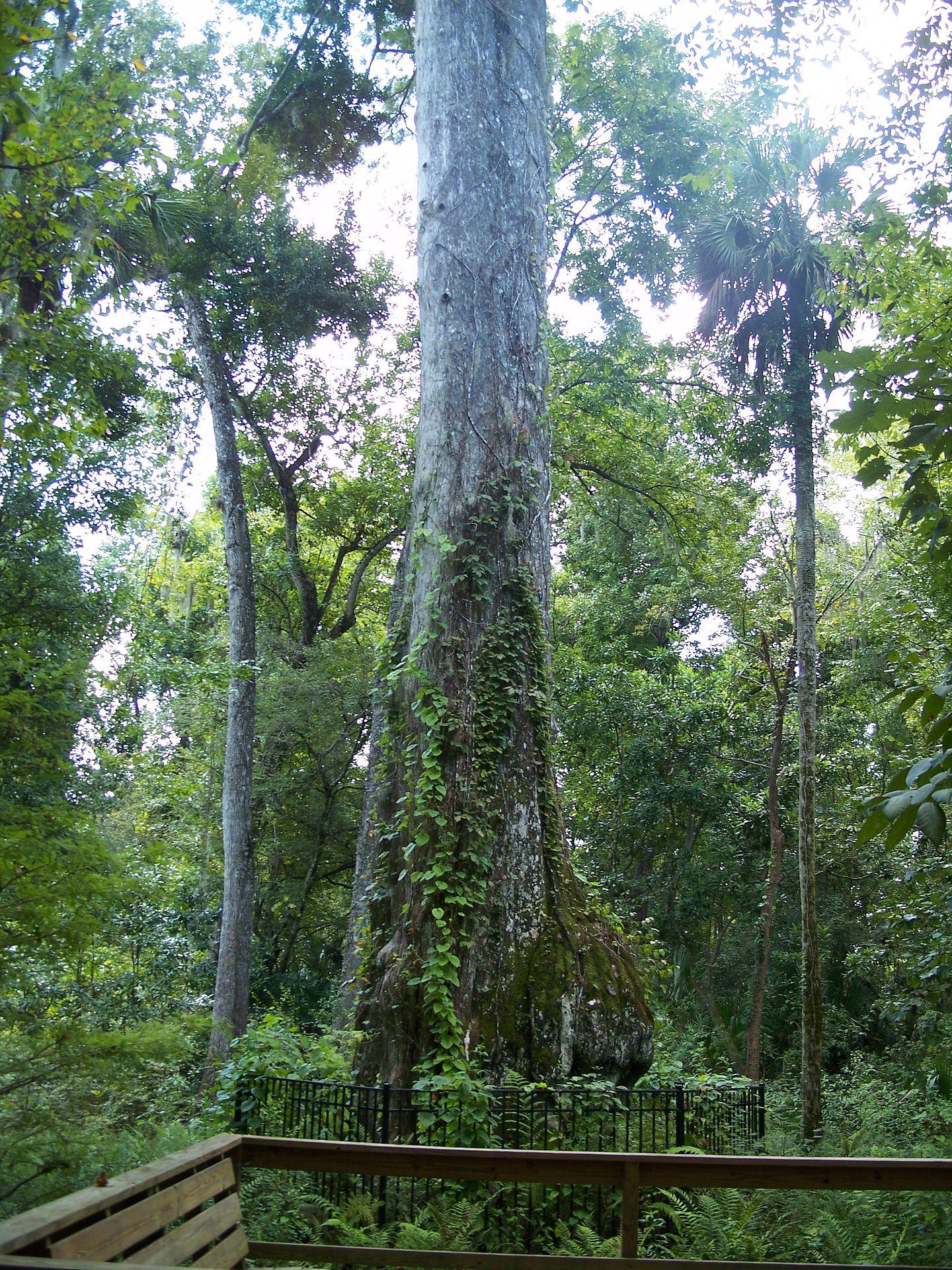 Longwood Florida Pest Control