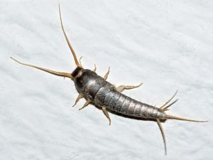 Central Florida Pest Control 2021